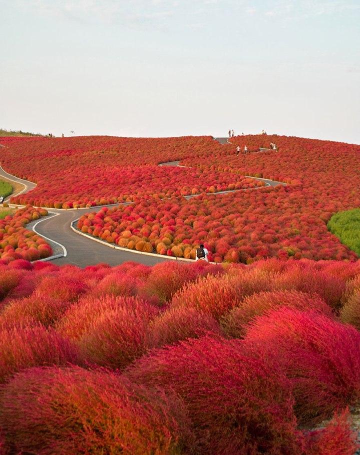 lugares-increibles-japon-2.jpg