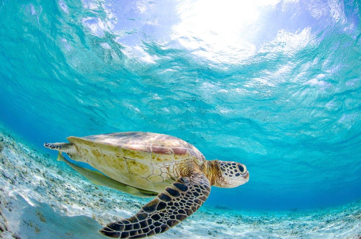 Destino Top de esta semana Isla la Tortuga Venezuela Paraíso encantado
